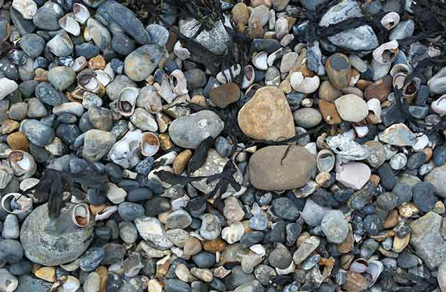 Collect pebbles and shells on Springvale beach