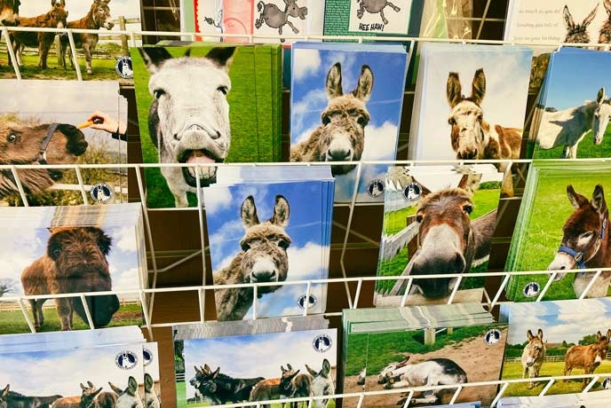The Isle of Wight Donkey Sanctuary