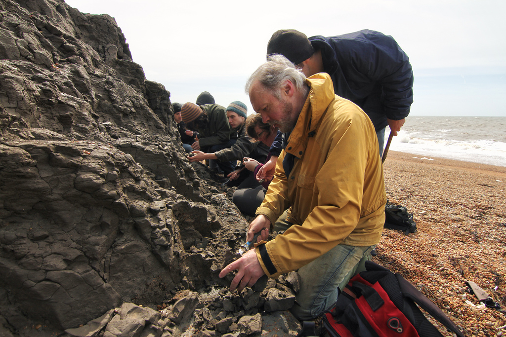 Isle of Wight Fossil Hunting